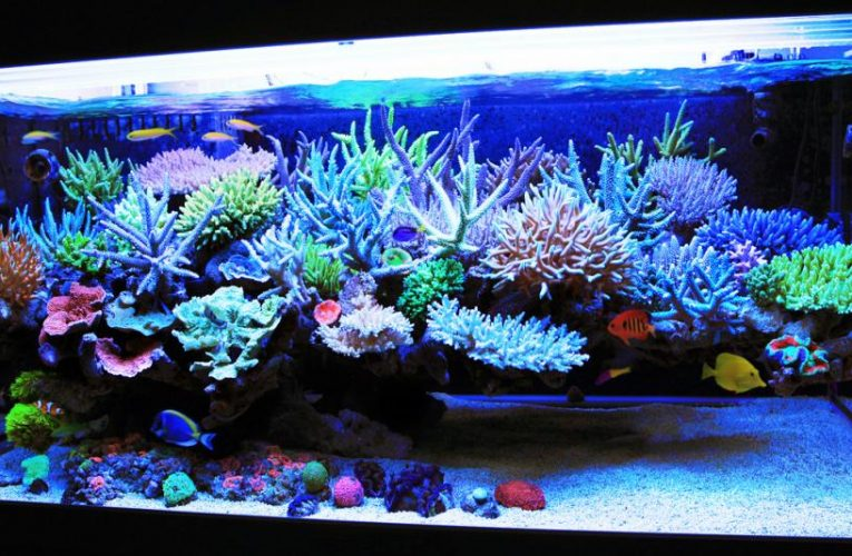 6-Year-Old Saves Baby Brother Who Nearly Drowned In Fish Tank