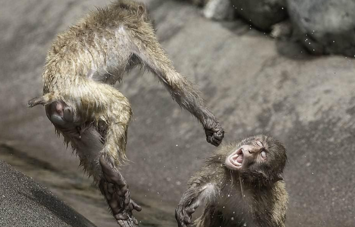 The Science of Duh! Long-term Soy Consumption Makes Monkeys Aggressive Loners